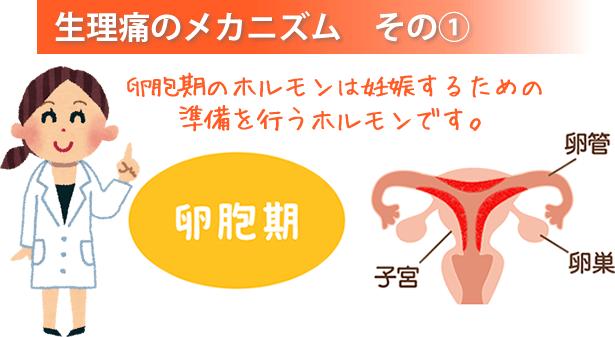 大分県中津市わいわい整骨院・整体院の卵胞期のホルモンについて